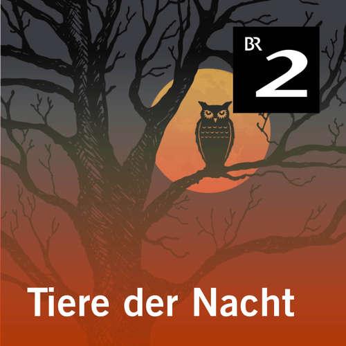 Hoerbuch Tiere der Nacht - Silke Wolfrum - Gerd Lohmeyer