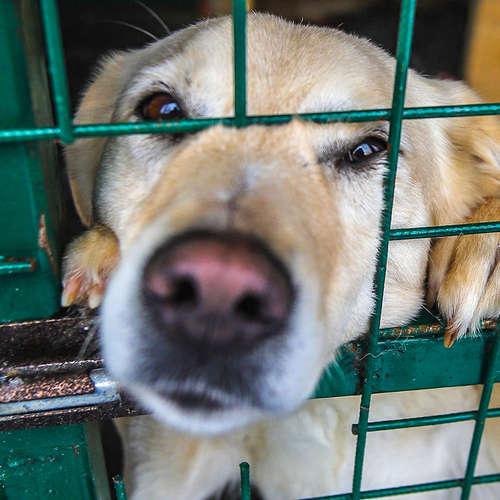 Das Tier und wir - Guter Umgang mit unseren tierischen Begleitern?