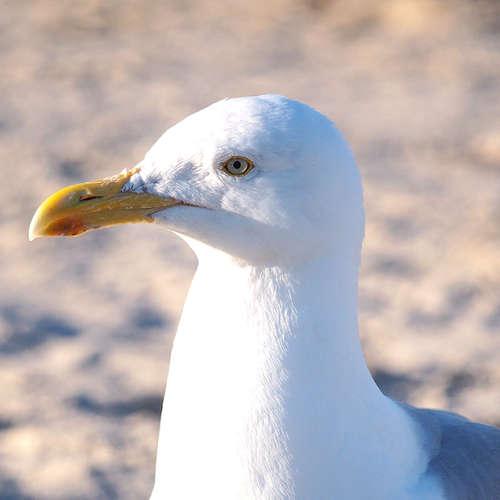 Seevogelkot