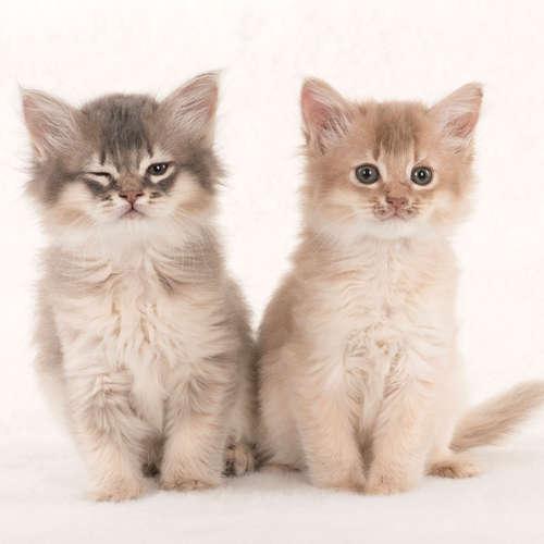 Blinzelnde Katzen