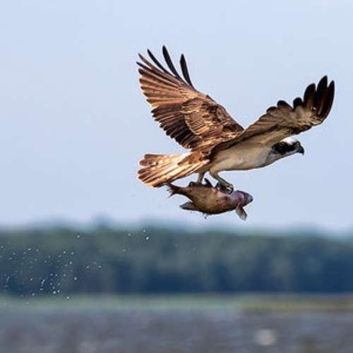Im Land der Adler auf der Mecklenburgischen Seenplatte