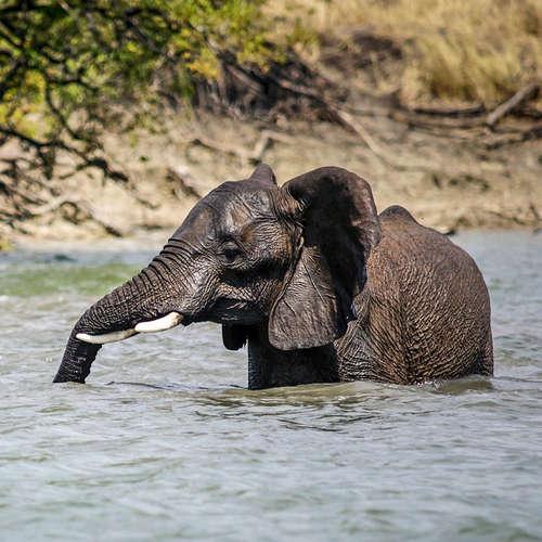"""""""Ein grenzenloser Traum"""" - Das Kavango-Sambesi-Schutzgebiet im Süden Afrikas"""