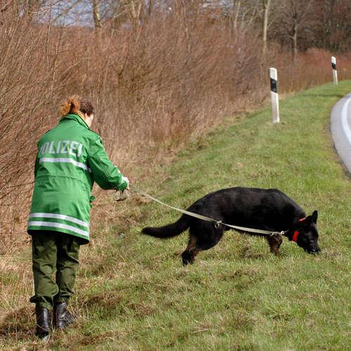 Die Kleine Anfrage: Wie folgen Hunde einer Geruchsspur?