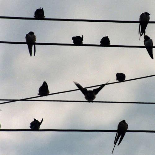 Der Vogel, der Vogel - Manifest 51 - Düsteres Märchen