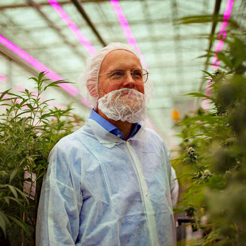 Gras als Medizin - Wie Deutschland in die Cannabis-Zukunft stolpert