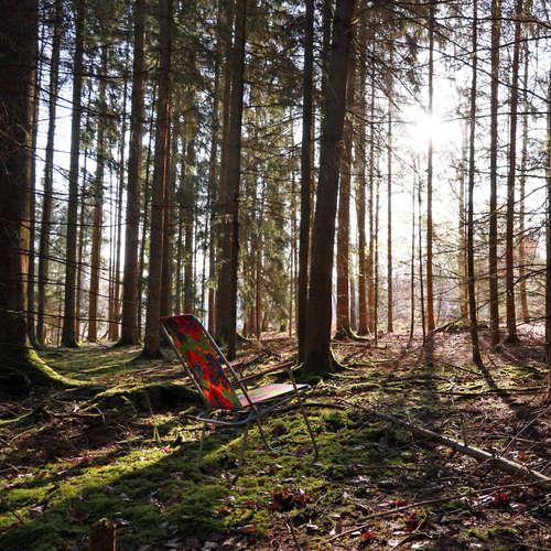 BONUSFOLGE: Frühlingserwachen mit Vogel, Fuchs & Co - Meditative Natursounds zum Entspannen