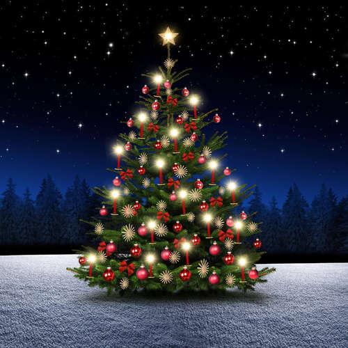 Mehr als eine Tanne - Wissenswertes rund um den Weihnachtsbaum