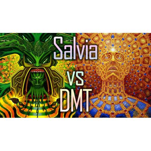009 – kleinerkiffer84 – Salvia vs DMT