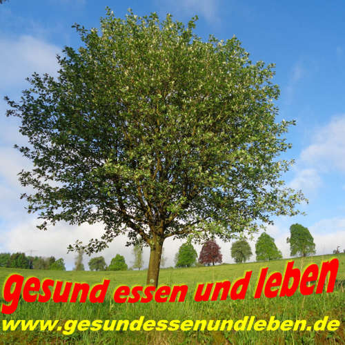 050 Unsere Seele