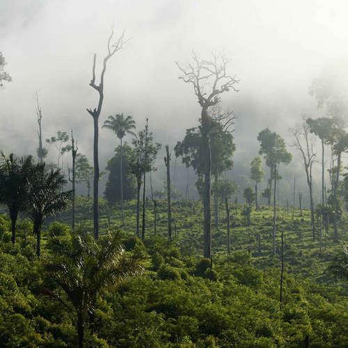 WWF kritisiert EU als zweitgrößten Waldvernichter