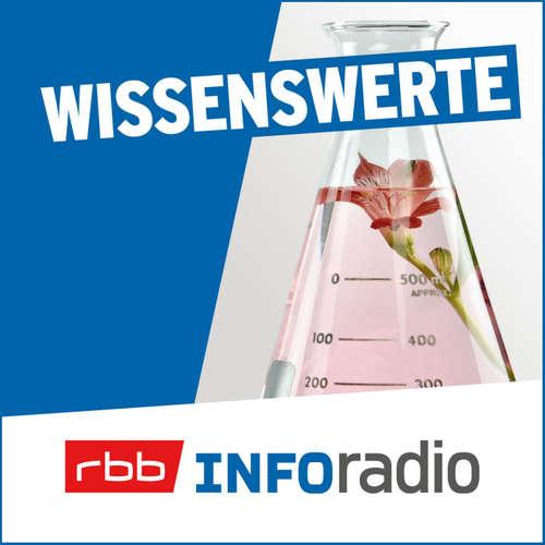"""Buchtipp: """"Der Welterkunder"""" von Frank Vorpahl"""