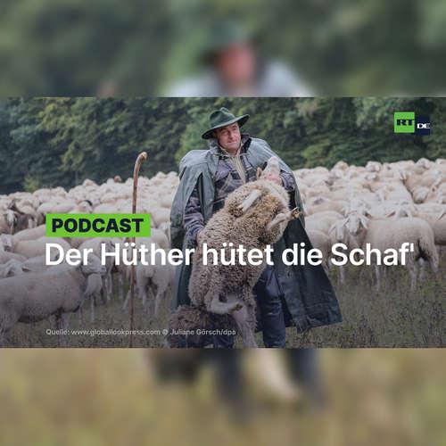 Der Hüther hütet die Schaf'