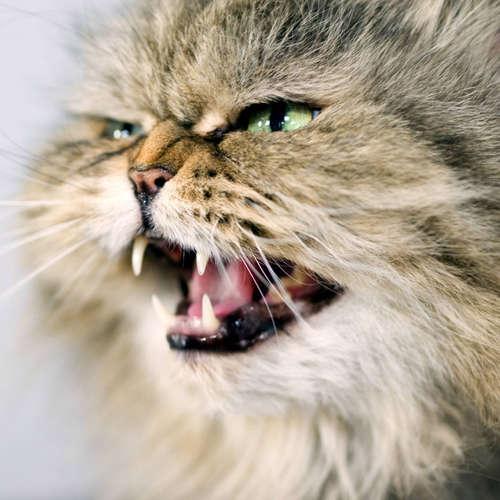 Warum greift mich meine Katze an?