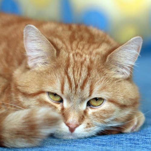 Warum macht meine Katze nicht ins Katzenklo?