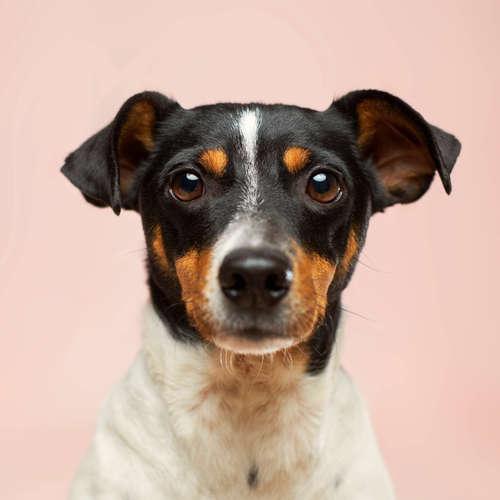 Auf den Hund gekommen - Heimtierboom zu Corona-Zeiten