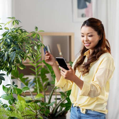 Der Hype um Zimmerpflanzen
