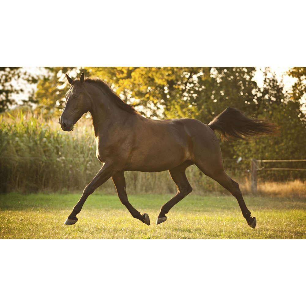 15.6.1878: In den USA wird ein trabendes Pferd fotografiert   Zeitwort