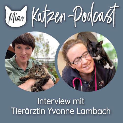 124 Verhaltensänderungen bei alten Katzen erkennen - Interview mit Tierärztin Yvonne Lambach 1/2