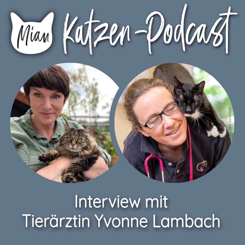 085 Insektenstiche bei Katzen - Interview mit Tierärztin Yvonne Lambach